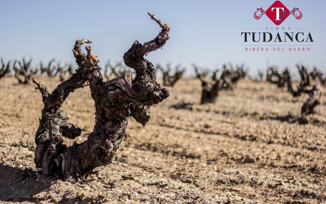 Grupo Tudanca asistirá a Prowein estrenando dos vinos y página web